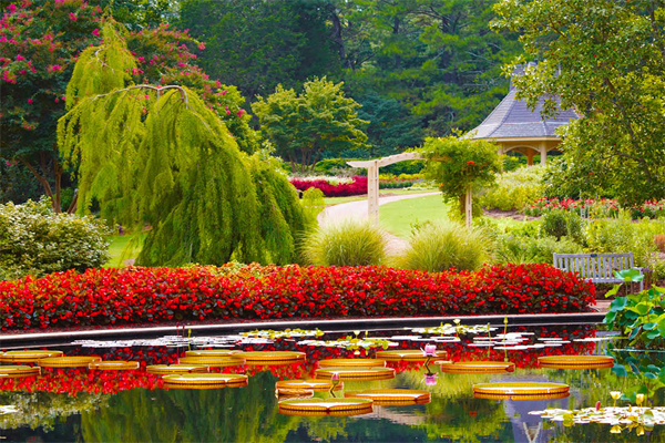 Khu vườn lung linh sắc màu